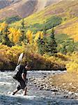 Randonneur avec Cannes traverse le ruisseau de Windy le long du sentier de la rivière de sanctuaire dans le Parc National de Denali, Alaska intérieur, automne