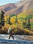 Randonneuse avec Cannes traverse le ruisseau de Windy le long du sentier de la rivière de sanctuaire dans le Parc National de Denali, Alaska intérieur, automne