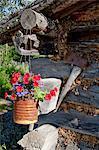 Blumen hängen außerhalb Blockhaus am Chena Indian Village auf der Riverboat-Discovery-Tour, Fairbanks, Alaska Interior, Sommer