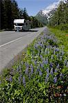 A motorhome drives down a lupine lined Richardson Highway leaving Valdez, Southcentral Alaska, Summer