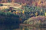 Autumn trees on hillside near River Tay, Aberfeldy, Scotland