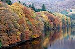 Autumn trees alongside Loch Tummel, Scotland
