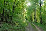 Dirt Road in Forest, Pfalzerwald, Rhineland-Palatinate, Germany