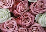Roses et de roses blanches, gros plan