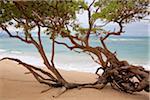 Paia Bay Beach, Maui, Hawaii, USA