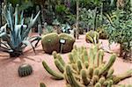 Cacti at Jardin Majorelle, Marrakech, Morocco