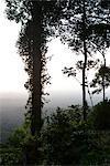South America, Amazon Rainforest scene