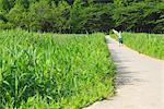 Japanese Boy Walking in Park
