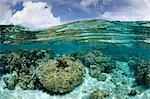 Over/under of coral garden