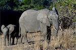 Female and baby elephant
