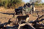 Touristes sur la faune de safari view