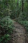 Path, Taman Negara National Park, Pahang, Malaysia