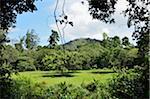 Forêt tropicale, le Parc National Taman Negara Pahang, Malaisie