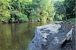 Rivière Tahan, forêt tropicale, Taman Negara National Park, Pahang, Malaisie