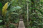 Boardwalk Through Rainforest, Taman Negara National Park, Pahang, Malaysia