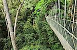 Couvert à pied, le Parc National Taman Negara Pahang, Malaisie