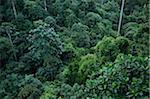 Rainforest, Sepilok Rainforest Discovery Center, Sabah, Borneo, Malaysia
