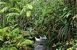 Rainforest Creek, Kinabalu National Park, Sabah, Borneo, Malaysia