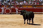 Bull in Bullring, Fiesta de San Fermin, Pamplona, Navarre, Spain
