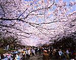 Ueno Onshi Park, Tokyo, Japan