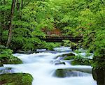 Oirase Stream, Aomori, Japan