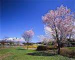 Koiwai Farm, Iwate, Japan