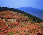 Mt.Kongo, Nara, Japan