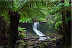 Australia, Tasmania, Mt Field National Park.  Horseshoe Falls.