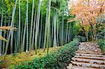 Asie, Japon. Kyoto, Sagano, Arashiyama, Temple de ji (Jojakkoji) Jojakko (XVIe siècle), bosquet du bambou et feuilles d'automne