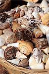 Coquilles de Grèce, Crète,