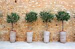 Grèce, Crète, Rethymnon, oliviers
