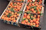 Morocco, Marrakech, berber market, oranges