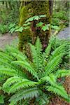 Fougères et forêt de Woodland Gardens, Courtenay, Colombie-Britannique, Canada