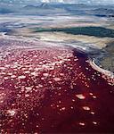 Lake Natron im nördlichen Tansania ist eines der die meisten Alkali des Rift-Systems.Wie sein Wasser in die intensive Hitze verdunsten, erstarrt NATRIUMSESQUICARBONAT, bekannt als Trona oder Natron, riesige Korallen Köpfe in bunten Wasser ähneln. Sichtbar über dem See Ol Doinyo Lengai ist der einzige aktive Vulkan in den Gregory Rift.