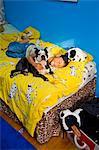 sieste avec chien sur lit de garçon