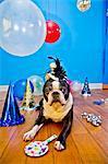 Hund in Partyhut mit Luftballons