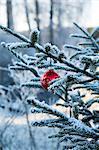 Une boule de Noël arbre accroché dans un arbre de Noël, Suède.