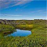Pond in Heroubreio, Iceland