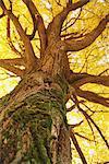 Tronc d'arbre, vue de dessous