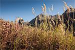 Orignal mâle chasseur s'arrête pour profiter de la vue car il randonnées hors zone de chasse avec bois d'orignal trophée sur son sac, oiseau Creek bassin versant, les montagnes Chugach, forêt nationale de Chugach, centre-sud de l'Alaska, automne