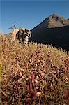 Orignal mâle chasseur s'arrête au verre la zone avec des jumelles comme il randonnées hors zone de chasse avec bois d'orignal trophée sur son pack, oiseau Creek bassin versant, les montagnes Chugach, forêt nationale de Chugach, centre-sud de l'Alaska, automne