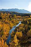 Automne paysage pittoresque comme vu de la Million Dollar pont camping le long de la route de l'Alaska entre Haines et de Haines Junction, territoire du Yukon, Canada