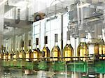 Wine bottles in plant