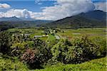 Champs de taro, Kauai, Hawaii, USA
