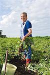 A woman standing in a potato-field, Skane, Sweden.