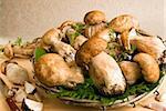Porcini (penny bun) (cep) mushrooms, (Boletus edulis), Italy, Europe