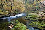 Autumn scenery by the Nedd Fechan River near Ystradfellte, Brecon Beacons National Park, Powys, Wales, United Kingdom, Europe