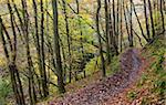 Footpath through autumnal woodland above the Nedd Fechan River near Pontneddfechan, Brecon Beacons National Park, Powys, Wales, United Kingdom, Europe