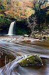 Sgwd Gwladus waterfall surrounded by autumnal foliage, near Ystradfellte, Brecon Beacons National Park, Powys, Wales, United Kingdom, Europe
