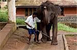 Elephant camp, Konni, Kerala, Inde, Asie